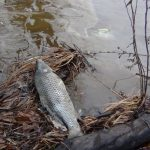 Potomac Riverkeeper: Updates on February 2016 Oil Spill on the Potomac River