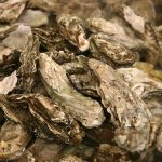 Waterkeepers: The Public Deserves a Voice in Oyster Recovery