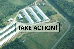 Act Now! Protect Communities from Pollution from Chicken Manure!