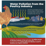 Poultry Industry Ammonia Air Pollution Adds More Nitrogen to Chesapeake Bay than all MD or PA Sewage Plants