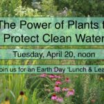 Lunch & Learn: The Power of Plants to Protect Clean Water