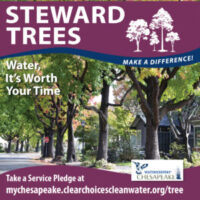 Trees Are Amazing! Take a Pledge to Protect Them!